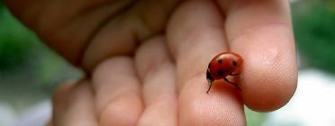 Mans amigues de la biodiversitat (imatge:flickr/LukeRavitch)