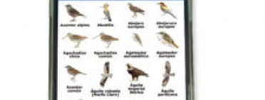 Seo Bird Life presenta una web app per identificar aus (imatge: seo.org)