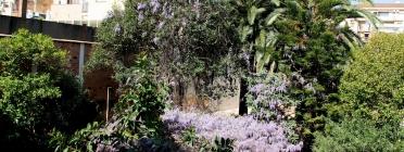 Una gran glicinia omple de color aquest racó de natura urbana preservat gràcies a l'acció veïnal (imatge:salveneljardí)