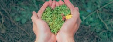 4 activitats gratuïtes amb motiu del Dia Mundial de l'Educació Ambiental Font: Pexels