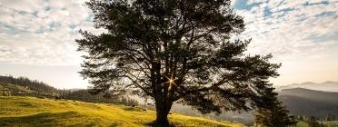 Plantar un arbre. Font: Pixabay