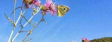 La Setmana de la Natura se celebra del 26 de maig al 5 de juny de 2018