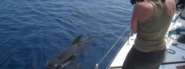 Una dona fotografia una petita balena des d'un veler