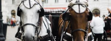Fa uns anys, ja va morir un cavall als Tres Tombs per esgotament. Font: Unsplash.