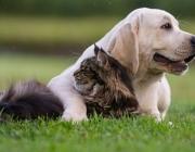 La Fundació Affinity difon els beneficis de tenir animals de companyia a la societat. Font: Fundació Affinity