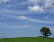 Paisatge amb arbre. Font: freefotouk (Flickr)