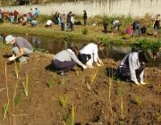 1a plantada Fes reviure el Ripoll! 2009 (foto: ADENC)