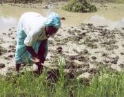 Dona treballant. Font: Web de l'escola Superior d'Agricultura de Barcelona