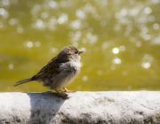 Ocell a la ciutat