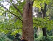 Els arbres sanadors al Jardí Botànic de Barcelona (imatge:flickr/diluvi)
