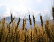 L'anuari de la sobirania alimentària es pot consultar en línia.