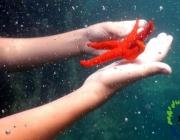 Els camps de treball dedicats a les ciències del mar