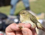 L'ICO organitza cursos d'ornitologia aquesta tardor