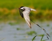 L'associació ICO permet començar l'any amb cursos i sortides sobre ocells