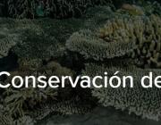 XIII Premis a la conservació de la biodiversitat