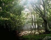 Catalunya és terra de boscos (imatge:creaf)