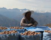 Dones de Bolívia amb cultius locals. Font: Nous Camins