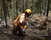 En Jaume Navarro fa 4 mesos que treballa en el programa de gestió de boscos d'Integra Pirineus. Font: Paula Gil