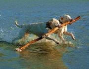La cooperació en el món animal. Font: google