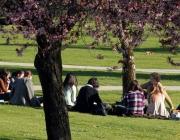 Formació en rotllana en un parc