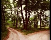 Dos camins divergents. Font: mstephens7 (Flickr)
