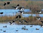 Depana organitza la 11º marató ornitològica cooperativa al Delta del Llobregat (imatge: sosdeltallobregat)