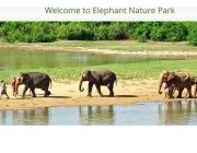 El blog El caballo de Nietzsche recull l'experiència de voluntariat amb elefants de Sara Hernández (imatge:elephantnaturepark.org)