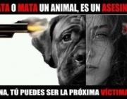 Encontres Animal: Violència contra els animals i violència interpersonal