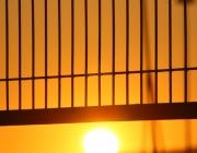 Reixa i posta de sol