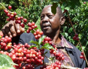 Productor de Comerç Just. Foto de Fairtrade
