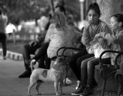 Noies banc menjant i gos mirant
