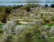 Comarca de les Garrigues. Font: web La Font del Biscarri