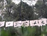 La campanya de Greenpeace recull la signatura de les abelles (imatge:greenpeacespain)