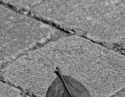 Fulla sola al carrer. Herència_LOPE - www.lphoto.es_ Flickr
