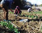 Joves implicats en l'hort ecosolidari de la UdG (Font: UdG)