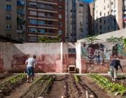 Imatge d'un hort urbà del Pla BUITS. Font: web ajuntament.barcelona.cat