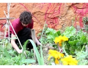 """El documental """"El sueño del mirlo"""" presenta horts urbans al centre de Barcelona (imatge:  El sueño del mirlo)"""