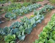 Hort ecològic (foto: enciams.blogspot.com)