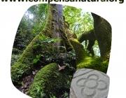www.compensanatura.org