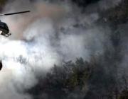 Subvencions a actuacions en matèria forestal i de prevenció d'incendis forestals 2020