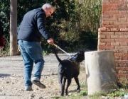 Voluntaris de la LLiga passejant a un gos (imatge:protectorabcn.es)
