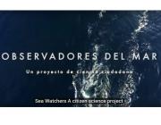El portal Observadors del Mar ofereix la possibilitat de col·laborar en 12 projectes de ciència ciutadana (imatge: observadorsdelmar.cat)