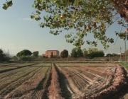 L'agricultura de proximitat és un dels valors del Baix Llobregat (imatge:elbaix.cat)