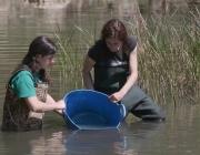El 26 d'abril va ser una jornada històrica en la recuperació del samaruc (imatge: paisatgesvius.org)