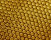 Panal d'abelles. Participació interna. Font: cruz_fr (Flickr)