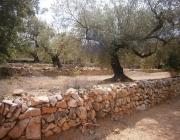 Els murs de pedra seca són un element identitari del nostre paisatge (imatge: flickr/diluvi)