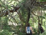 Jornada d'aproximació a la natura amb Joseo Gordi, al paratge natural de Poblet (imatge: gencat)