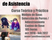 Curso Instrucción Perros de Asistencia