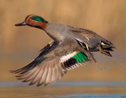 XIV Premis a la conservació de la biodiversitat
