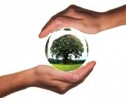 Imatge simbòlica de protecció del mediambient. Font: Pixabay